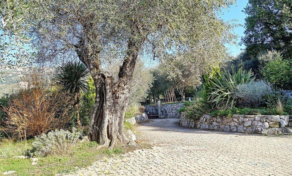 Villa avec piscine hauteur de Contes : Photo 6